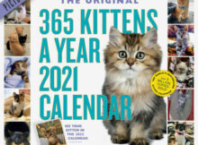365 Kittens A Year Picture A Day Wall Calendar 2021 EBay